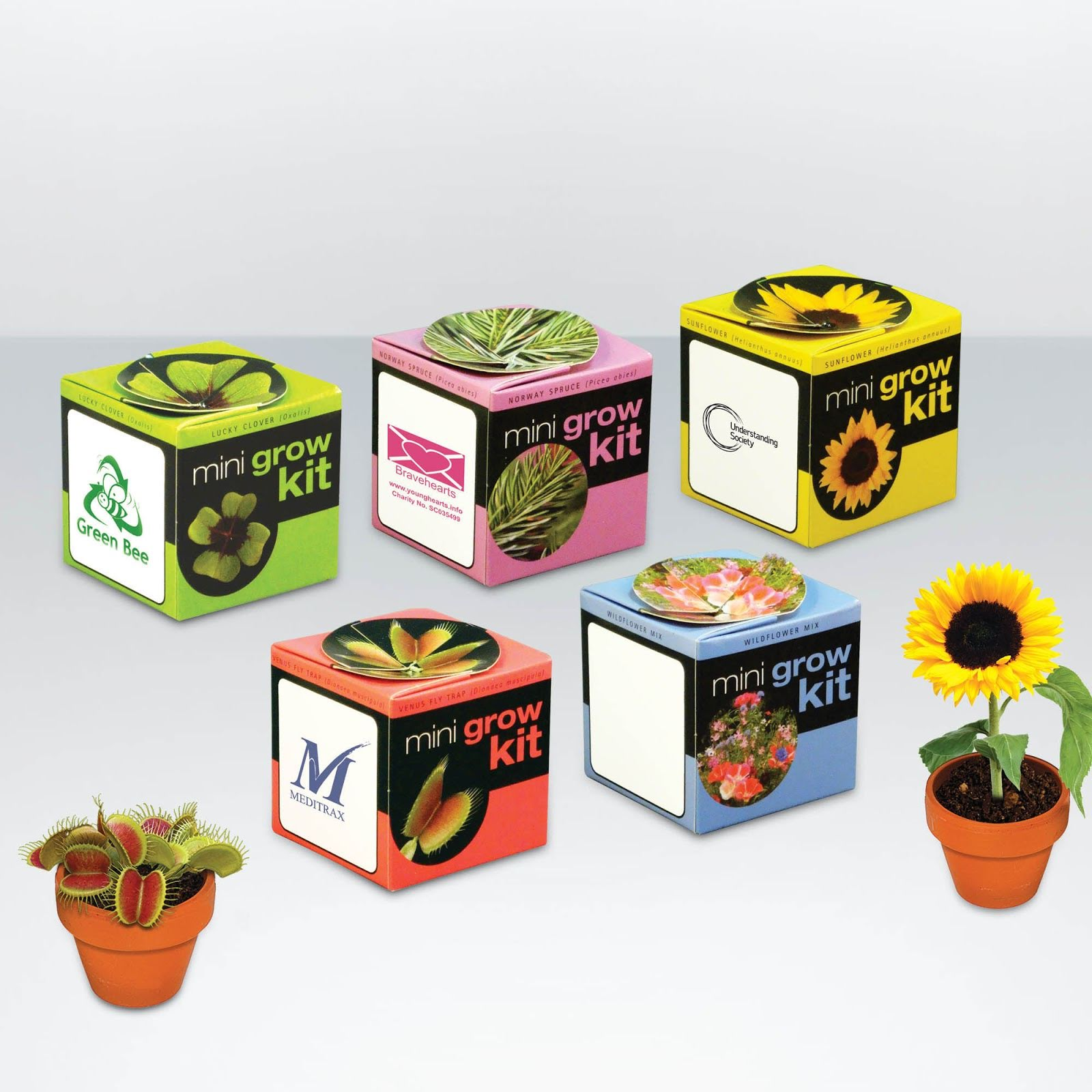 Mini Terracotta Flowerpots with Seeds