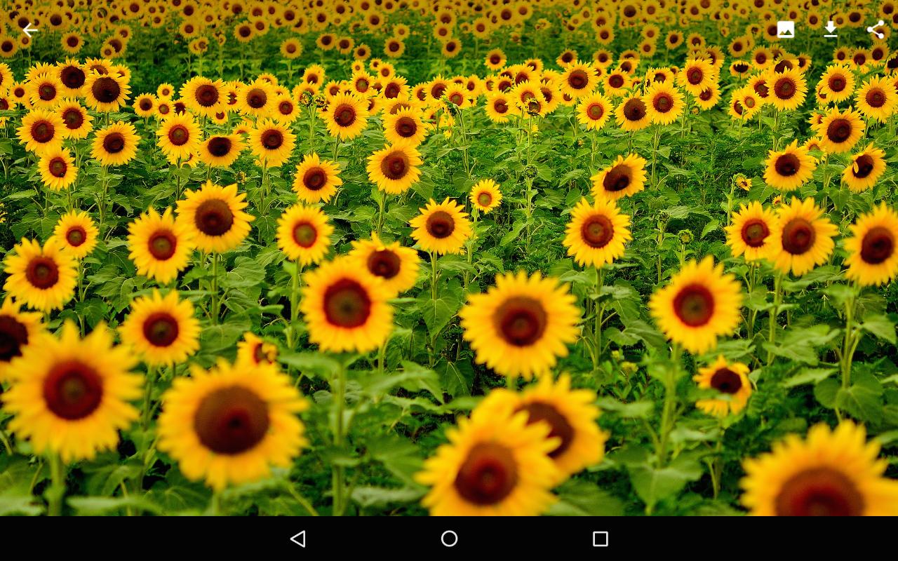 Backgrounds HD (Wallpapers) - screenshot