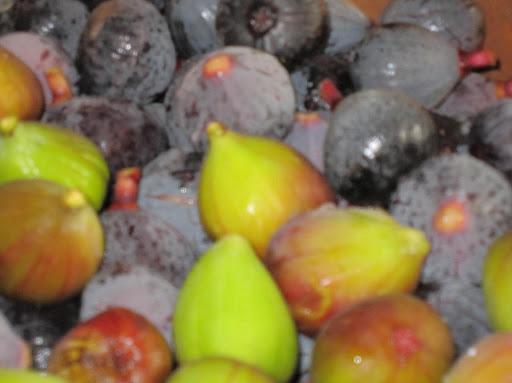En septembre, les figues du verger