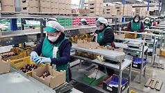 La actividad agrícola y su mantenimiento durante todo el Estado de Alarma ha hecho que la crisis no se acentúe aún más.