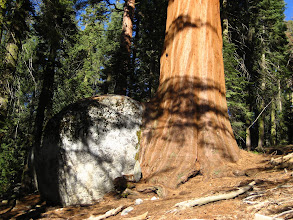 Photo: Sanki kaya ağaçtan doğmuş gibi.