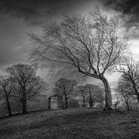 Clackmannan Tower surronded by trees. by Jon Marshall - City,  Street & Park  Vistas
