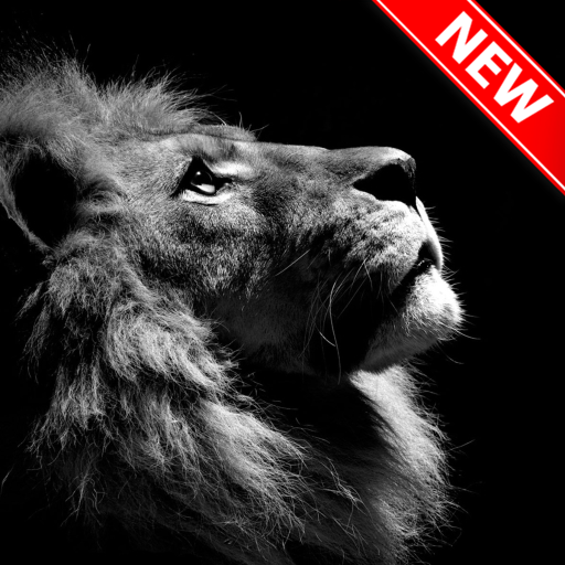 Lion Wallpapers Aplikacje W Google Play