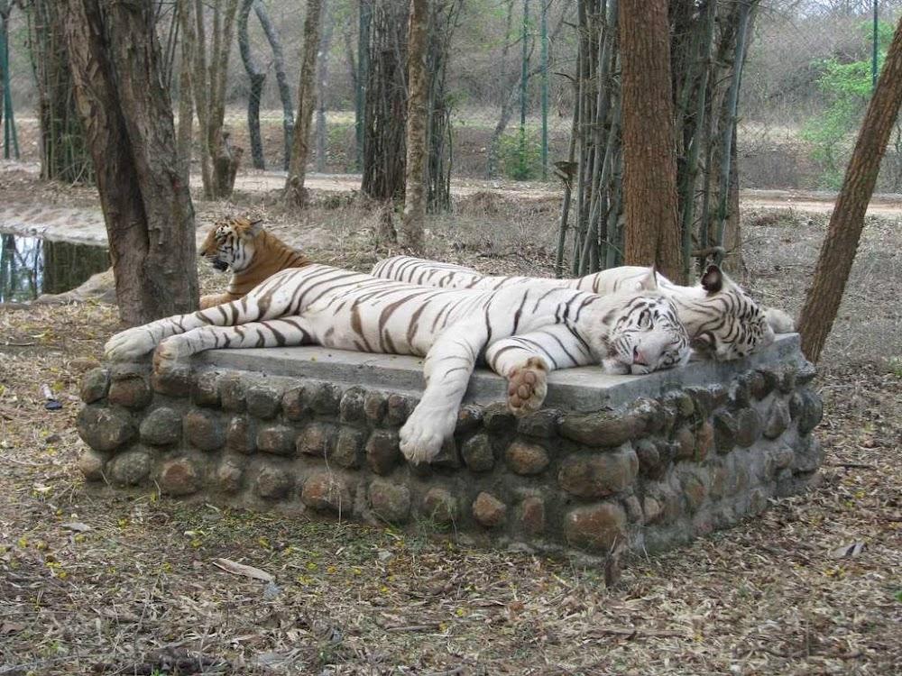 places-visit-bangalore-bannerghatta-national-park-image