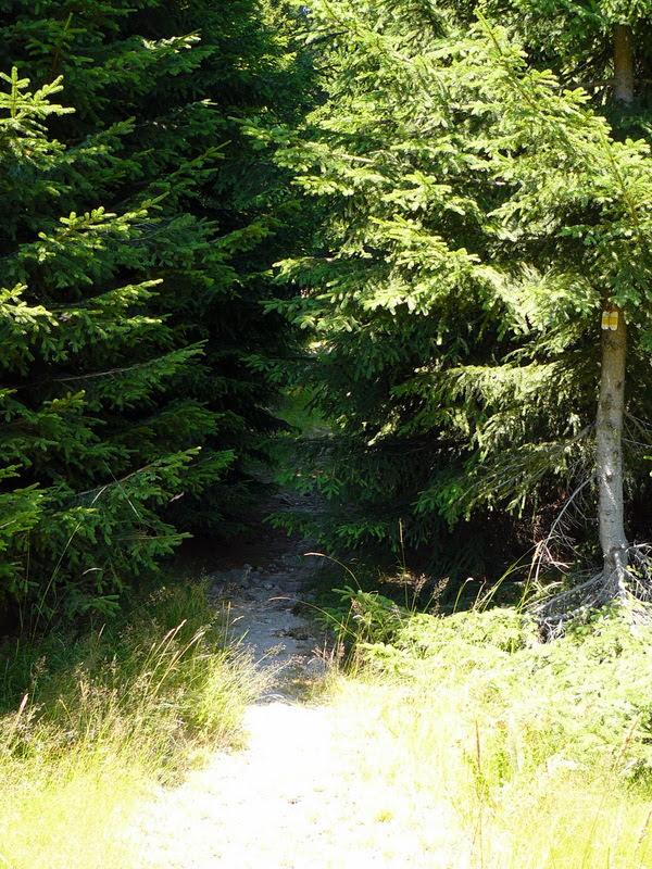 Туристическа пътека в гората