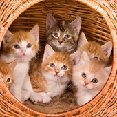 Kittens And Cats Wallpapers
