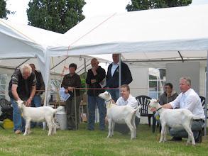 Photo: Rubriek 1: witte lammeren geboren tussen 15-2 en 2-3 2012. 1a. Janneke 15, 1b. Janneke 12, 1c. Janneke 14. Alle witte lammeren zijn eigendom van J. Hogervorst.