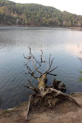 ... natura che muore di Pakiphoto