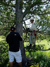 Photo: Josh getting ready to climb while Dash cores the tree