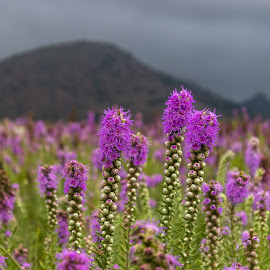 by Kathy Suttles - Flowers Flowers in the Wild (  )