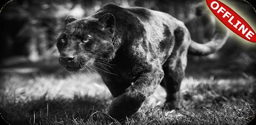 Descargar Black Panther Animal Wallpaper Hd Para Pc Gratis