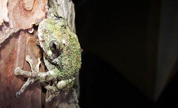 Photo: Frog