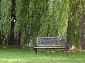 Photo: weeping willow and bench in back yard