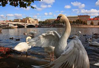 Photo: Prague - pohledz břehu  Vltavy na Rudolfinum
