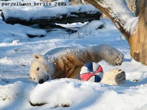 Photo: Knut geniesst lieber den Schnee :-)