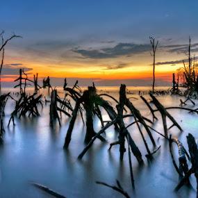 Twilight of mangrove by Sham ClickAddict - Landscapes Beaches