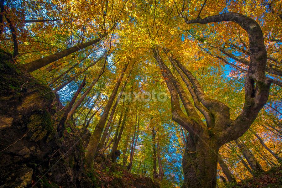 Canyon Kamacnik by Stanislav Horacek - Nature Up Close Trees & Bushes
