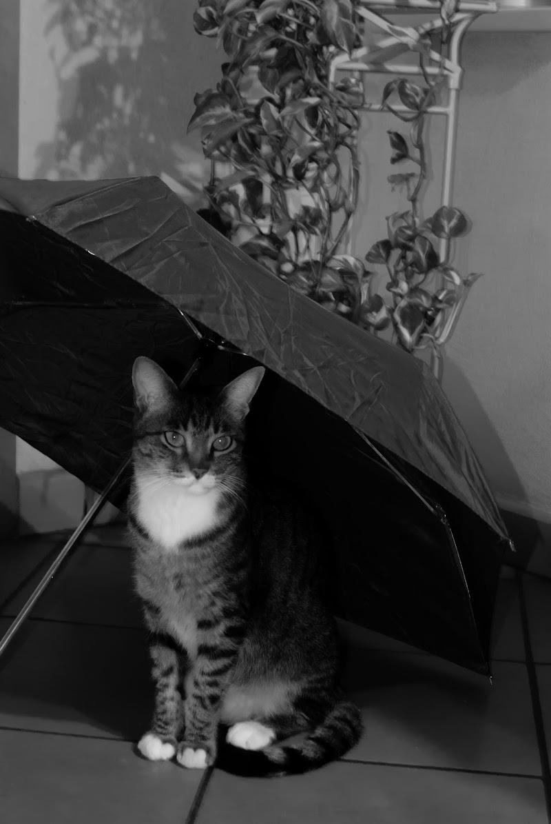 Istinti felini di tommaso_frassini