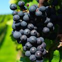 grape live wallpaper icon