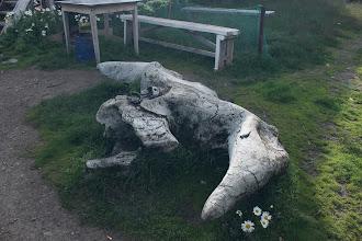 Photo: Позвонок кита.