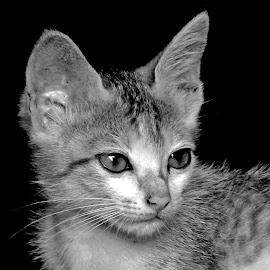 Cat by Asif Bora - Black & White Animals