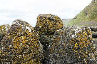 Photo: Lichen on rocks, Giant's Causeway