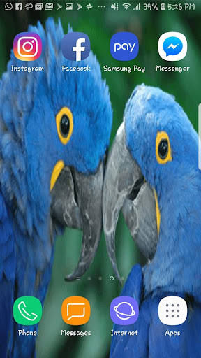 Download Love Birds Beautiful Hdwallpaper Mobile Background Free For Android Love Birds Beautiful Hdwallpaper Mobile Background Apk Download Steprimo Com