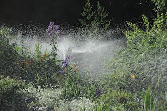 Photo: Watering our flower garden 06/08
