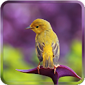 Bird Wallpapers HD icon