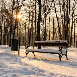 Under the snow by Witold Steblik - City,  Street & Park  City Parks ( winter, nature, bench, park, snow )