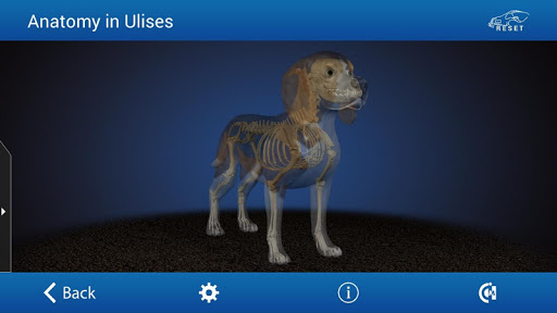 Osteology in Dogs Licensed