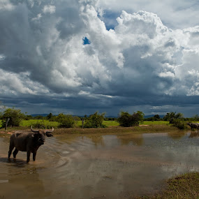 Cambodia by Bernard Evans - Landscapes Travel ( water, clouds, cambodian landscape, landscape, cambodia )