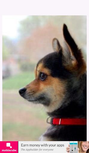 玩免費遊戲APP|下載Chihuahua app不用錢|硬是要APP