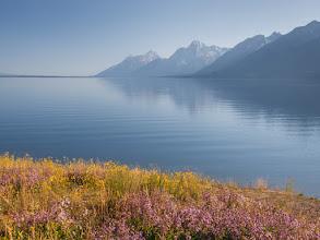 Photo: Wildflowers by Jackson Lake