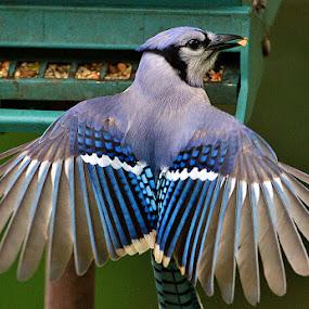 by Robert Strickland - Animals Birds (  )