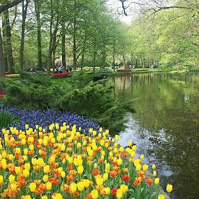 Spring in the Keukenhof by Dee Haun - Flowers Flower Gardens ( water, orange, 2006, stream, 060506a199e1, keukenhof, flower gardens, yellow, tulips, relaxing, landscape, spring, flowrs, vista, trees, walkway,  )