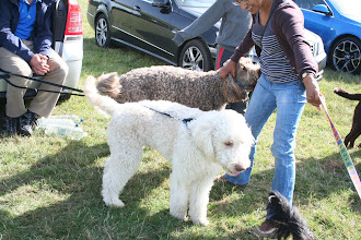 Photo: Brian and Alan Labradoodle getting a cuddle from Tilly Labradoodle's mum, Naz