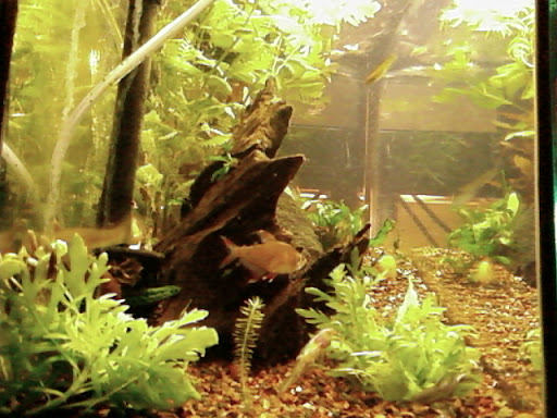 www.RickNakama.com wall aquarium