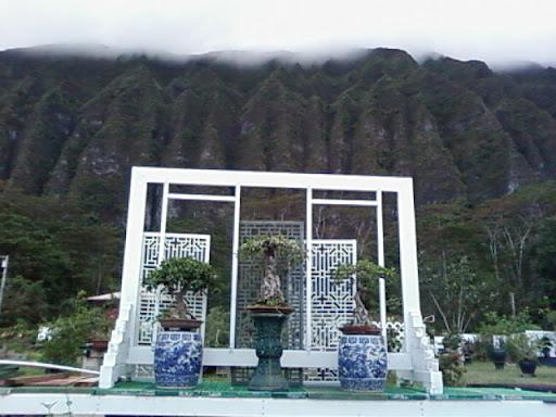 www.RickNakama.com Master Liew Dragon Garden Bonsai