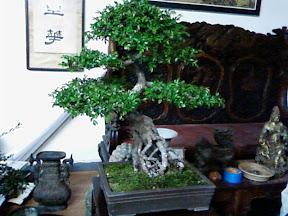 www.RickNakama.com bonsai class