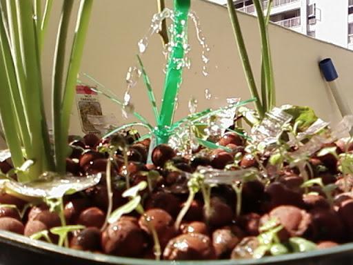 www.RickNakama.com hydroponics
