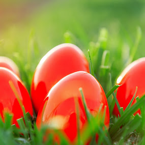 Red Easter Eggs in green grass by Grigor  Ivanov - Public Holidays Easter ( bright, yellow, egg, colour, colourful, nature, event, light, objects, grass, sunlight, holiday, eggs, season, food, outdoors, day, colorful, joy, cultures, holidays, cute, spring, sun, photography, holyday, easter egg, fresh, happy, sunny, idyllic, finding, decorating, ideas, green, beautiful, backgrounds, celebrations, concepts, close up, field, red, easter, color, background, summer, celebration, garden, springtime, daylight )