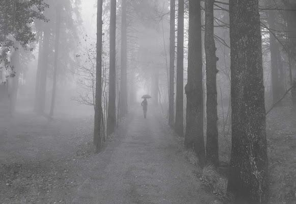 Nel vagare nella nebbia, ognuno è  solo di Marlak