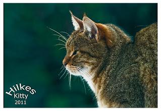 Photo: Kitty 2011