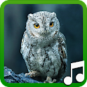Bird Calls and Sounds icon