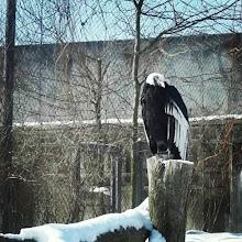 Photo: #Zoológico  en #Invierno