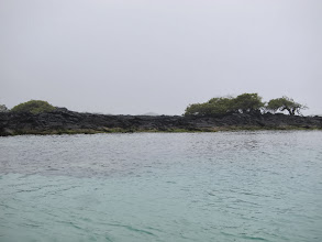 Photo: Tintoreras islet