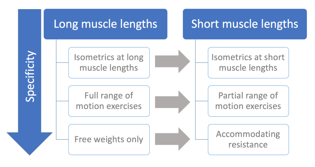 Joint angle-specific strength gains
