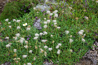 Photo: Wełnianki (Eriophorum)