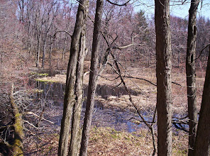 Photo: View from Waterloo-Pinckney Trail south of Seymour Road, April 27th